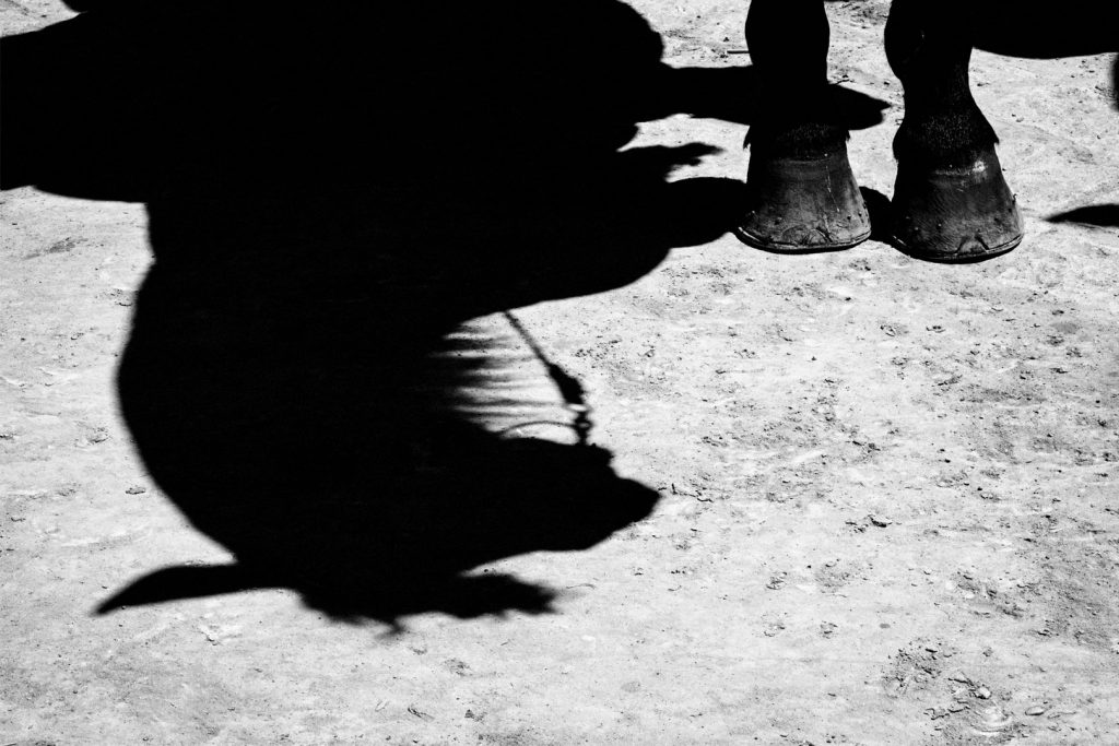 Feria-jerz-caballo-sombra