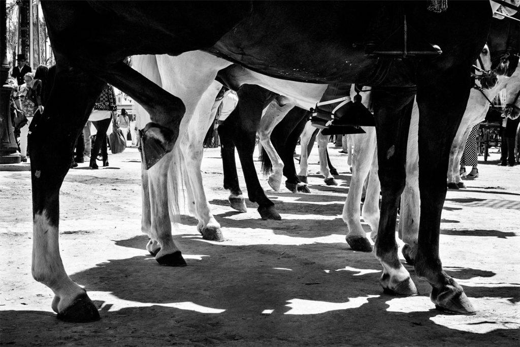 Feria-jerz-caballos