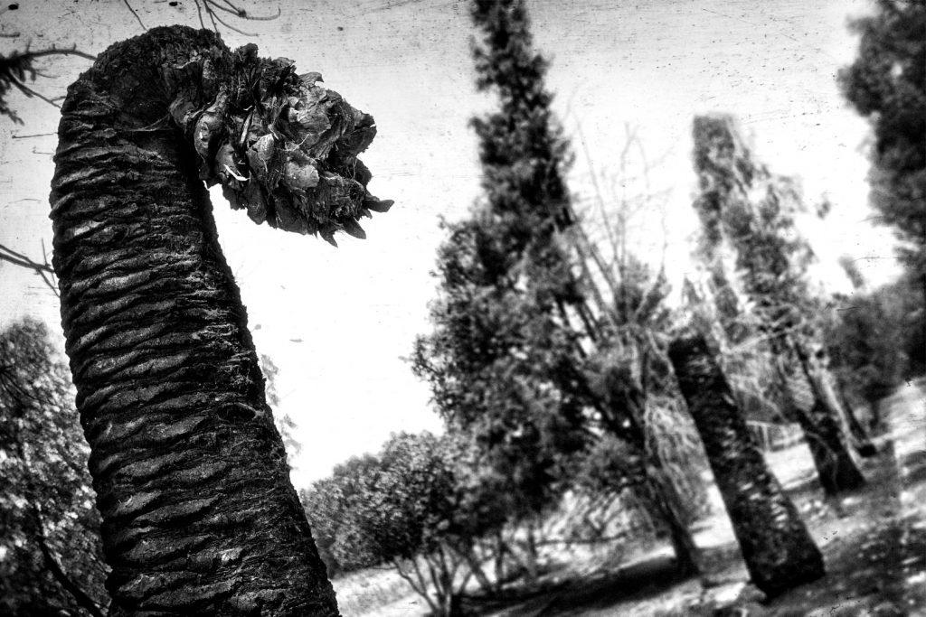 Miscelania-dragon