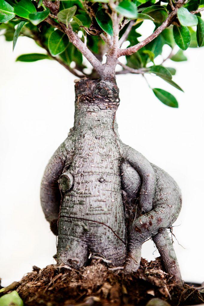 Miscelania-el-bonsai-feliz